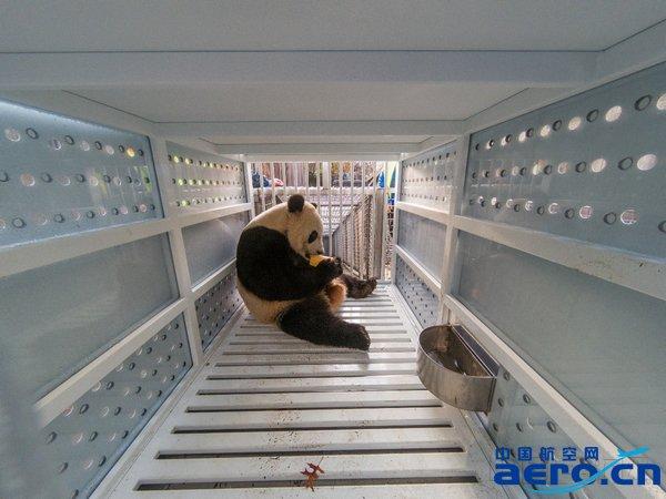 """被安置在联邦快递特制集装器中的大熊猫""""贝贝"""" -- 图片来自美国华盛顿史密森尼国家动物园.jpg"""
